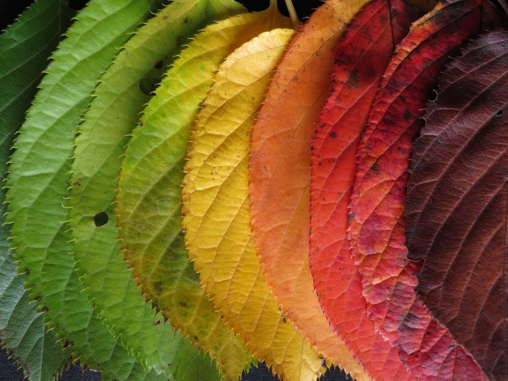 A variety of autumn leaves transitioning from green to yellow to orange to red.
