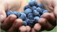 Healthy Fruits in Winter 10