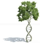 Psinergy Natural Health and Holistic Wellness 2