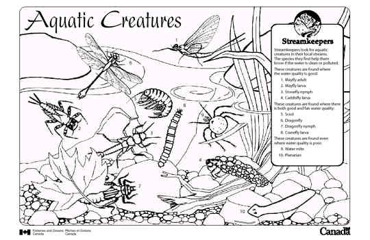 Invertebrates Coloring Pages Sketch Coloring Page