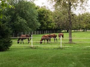 Kristy horses