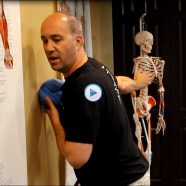 Quick Tip: Did you know stretching your pecs can relieve neck and back tension?