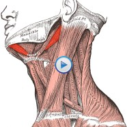 Quick Tip: Want to address your neck tension at home?