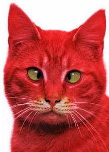 Vaginal psoriasis often results in a confused, red pussy
