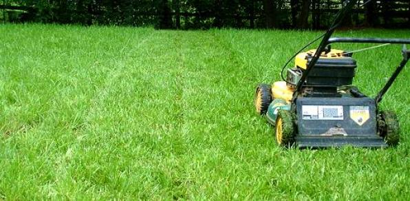 ask-julie-what-proper-mowing-height-grass-1-copy