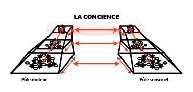 Conscience pyramidale