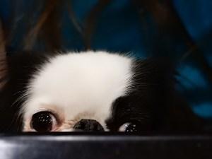 Hestia peeking over table