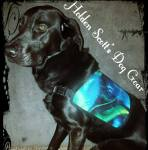"""Picture with text: Black lab wearing shiny blue plastic vest. Text in diagonally placed script reads: Holden Scott's Dog Gear""""."""