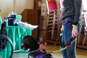 Small-framed woman with long blonde hair stands looking left and calmly holding the leash of a black, pittie-type service dog in a purple vest with a pink flower attachment on its collar.