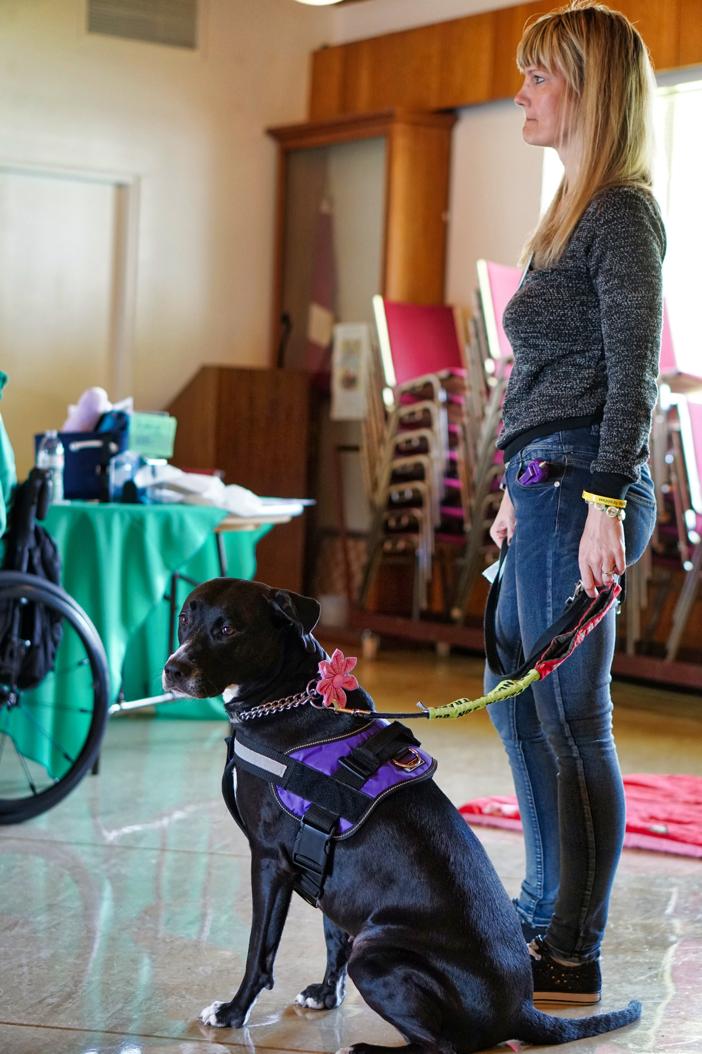 Service Dog Laws Faq Service Dog Vs Esa Vs Therapy Dog