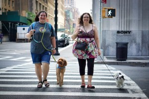 A woman with shorts and a tshirt walks across a city street with a tan Labradoodle. Next to her is a woman in a dress and leggings and her small Japanese Chin.