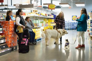 People and dogs stand and sit in a wide aisle of a grocery store around a woman with a small dog who is explaining something to the small group.