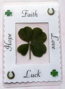 Genuine Four Leaf Clover
