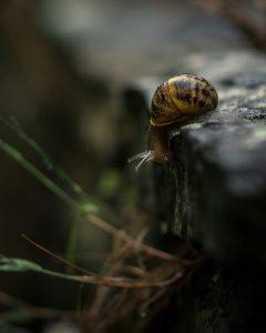 lachlan gowen snail and ledge unsplash scaled - lachlan-gowen-snail and ledge-unsplash