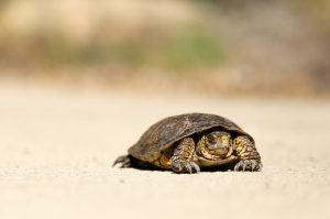 nick abrams tortoise turtle unsplash scaled - nick-abrams-tortoise_turtle-unsplash