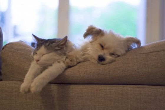 Sleeping-Cat-and-Dog