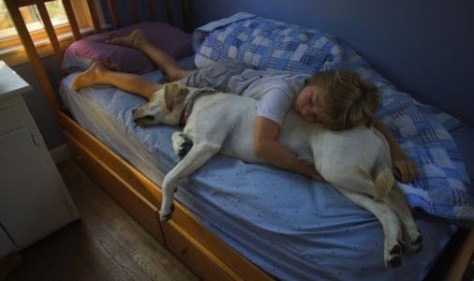 Sleeping dog and child 3