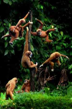 opice na strome