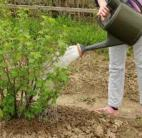 arroser les plantes