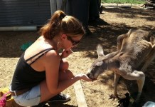 Feeding Red Kangaroo's In Blackall, Queensland