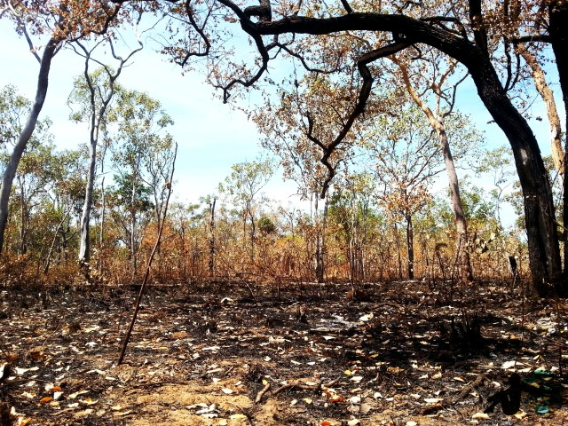 After bush fire australia