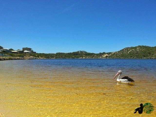 Moore River, Perth