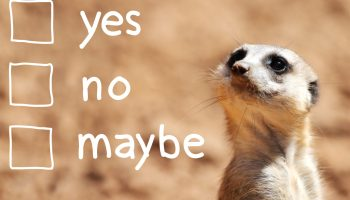 A portrait of a cute african suricate making decision over light brown background. Is he considering challenges with performance appraisals?