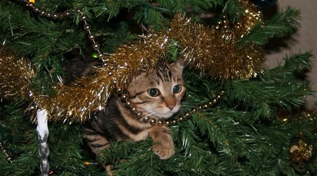 kitten on a Christmas tree