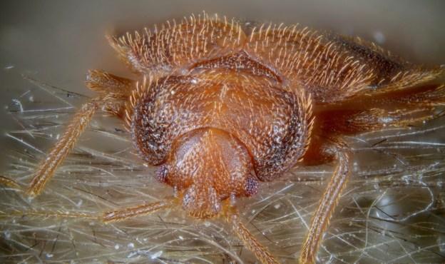 pest bug