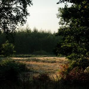 Haldon Forest