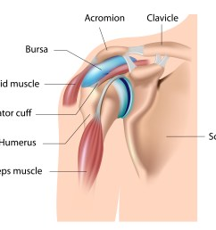 in many of the joints in our body there are structures called bursa  [ 5000 x 4001 Pixel ]