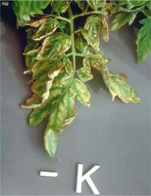 Role of Potassium in Plant Culture   PRO-MIX Greenhouse ...