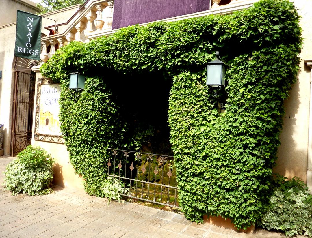 Indoor Hanging Ivy