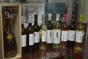 De acordo com o dirigente a produção de vinho este ano foi cerca de 25% acima do que seria normal/ Foto: Salomé Ferreira