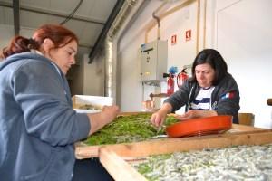 Susana Martins e Julia Brás a alimentar o bicho-da-seda/ Foto: Salomé Ferreira