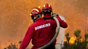UTAD estuda comportamento de bombeiros em situações de combate a incêndios/Foto: Direitos Reservados