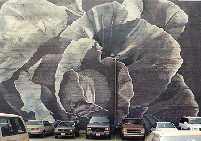 Kim Grover Abierto Untitled cabbage mural