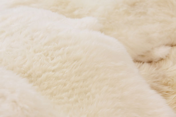 Sheepskin Texture Free Stock Photo  Public Domain Pictures