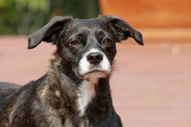 Black Mongrel Dog Free Stock Photo Public Domain Pictures