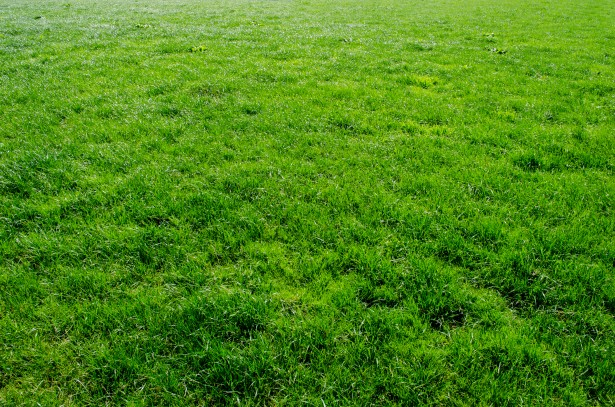 Green Grass Free Stock Photo Public Domain Pictures