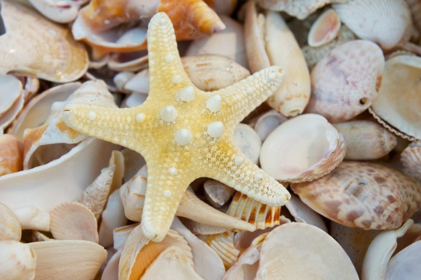 Pile Of Seashells Free Stock Photo  Public Domain Pictures