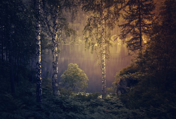 Bing Free Fall Wallpaper Gloomy Forest Background Free Stock Photo Public Domain