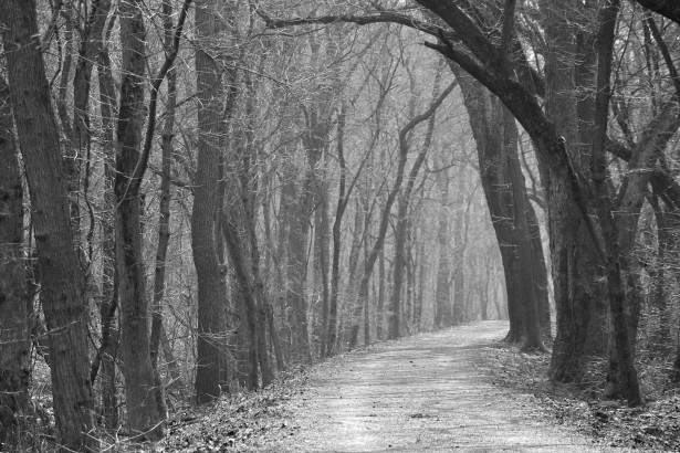 Haunted Path Free Stock Photo  Public Domain Pictures