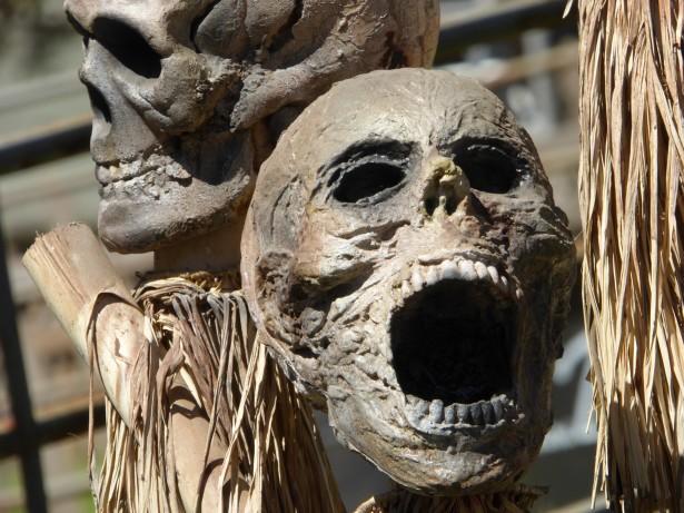 Image result for skulls screaming fossils