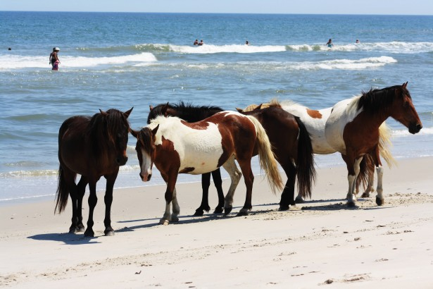 Fall Beach Wallpaper Wild Horses At The Beach Free Stock Photo Public Domain