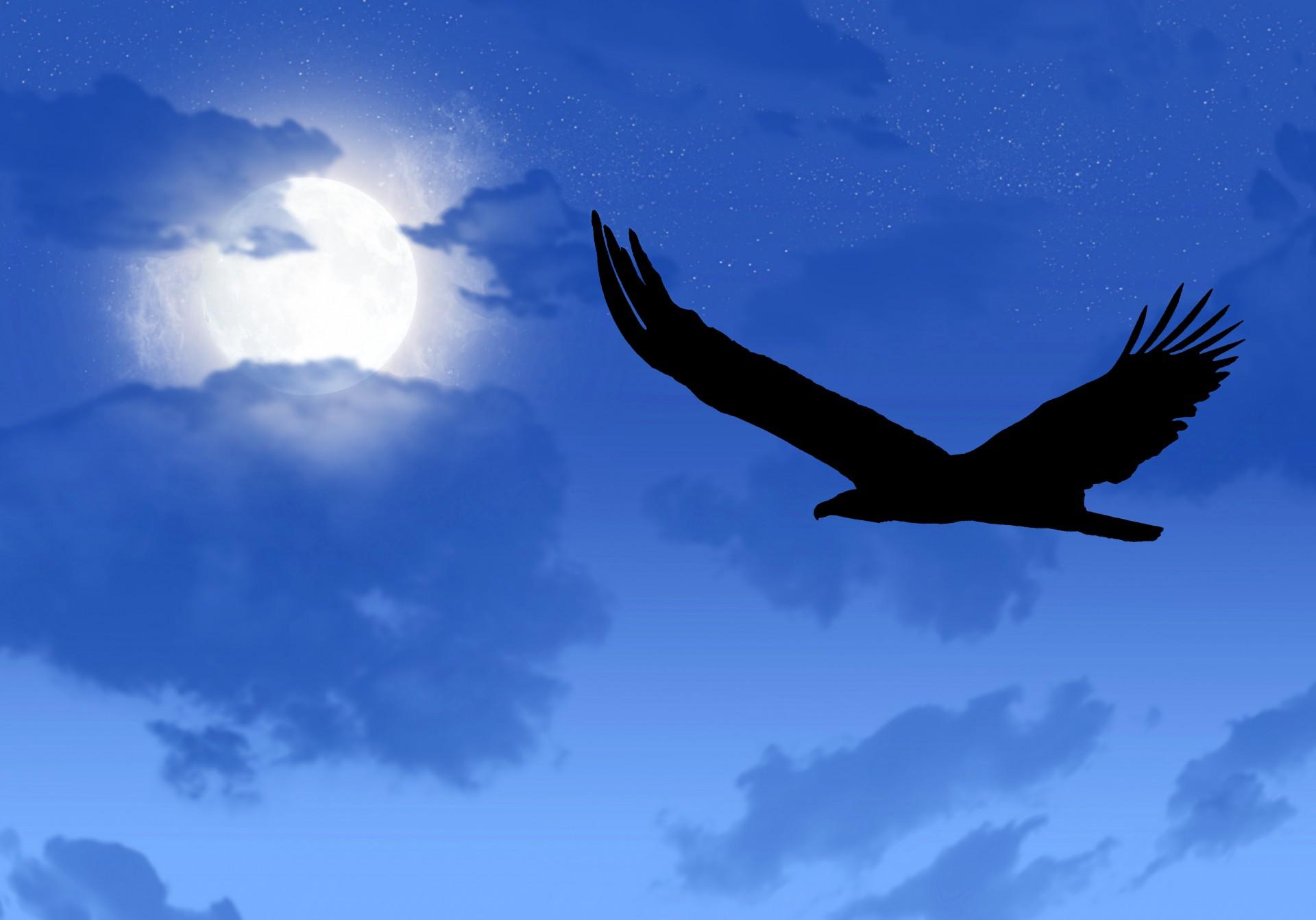 eagle, moon, flying