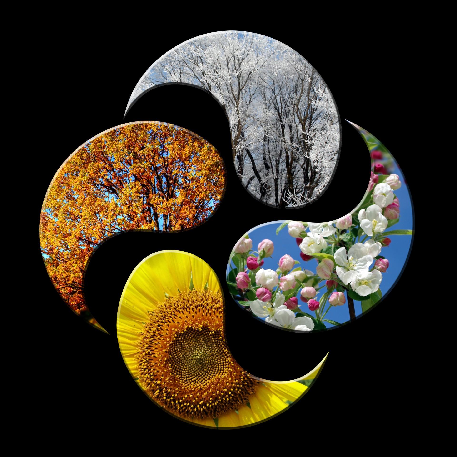 Four Seasons Free Stock Photo