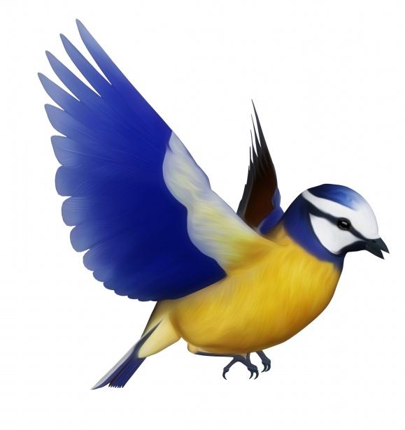 blue tit bird clipart free stock