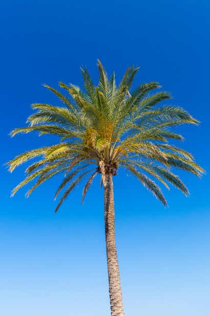 Blue Wallpaper Hd Download Palm Tree And Blue Sky Free Stock Photo Public Domain