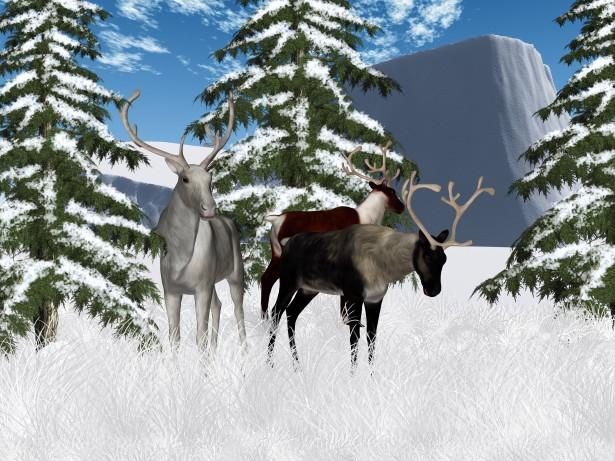 Winter Reindeer Scenery Free Stock Photo Public Domain